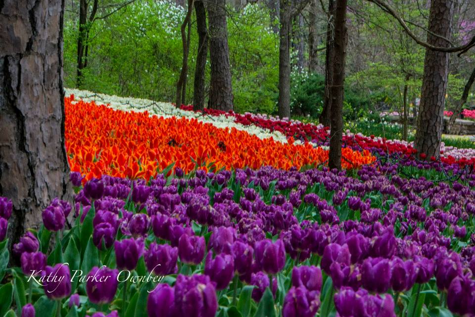 The Flowers At Garvan Woodland Gardens Never Disappoint In Spring Econo Lodge Inn Suites